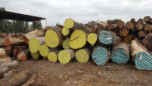 Urban Lumber Logs
